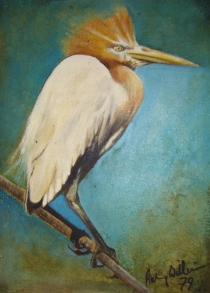 Tick-Bird-–-Aubrey-Williams-620